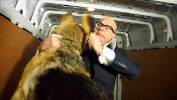 stars in their eyes harry hill dog